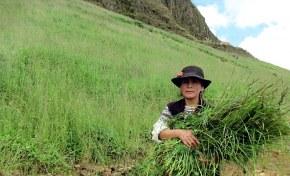 Transforman relaves mineros en tierrasagrícolas
